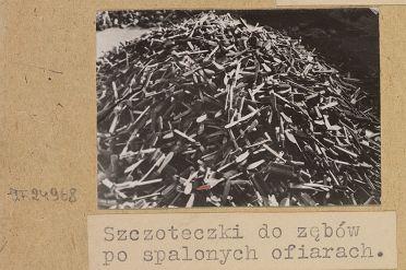 szczoteczki_polona_1.jpg